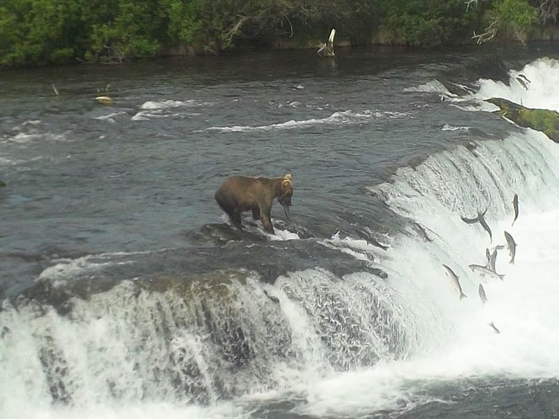 Brooks Falls - Katmai National Park