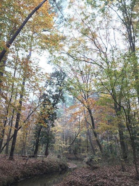 Fall foliage on Long Branch Creek