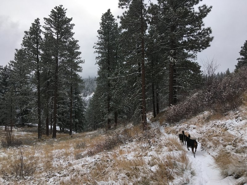The pups running along a wintry Stairway to Heaven Trail