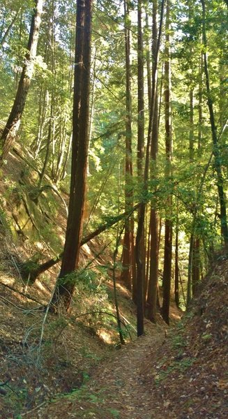 Loma Prieta Grade is in a steep-sided valley as it approaches Bridge Creek.