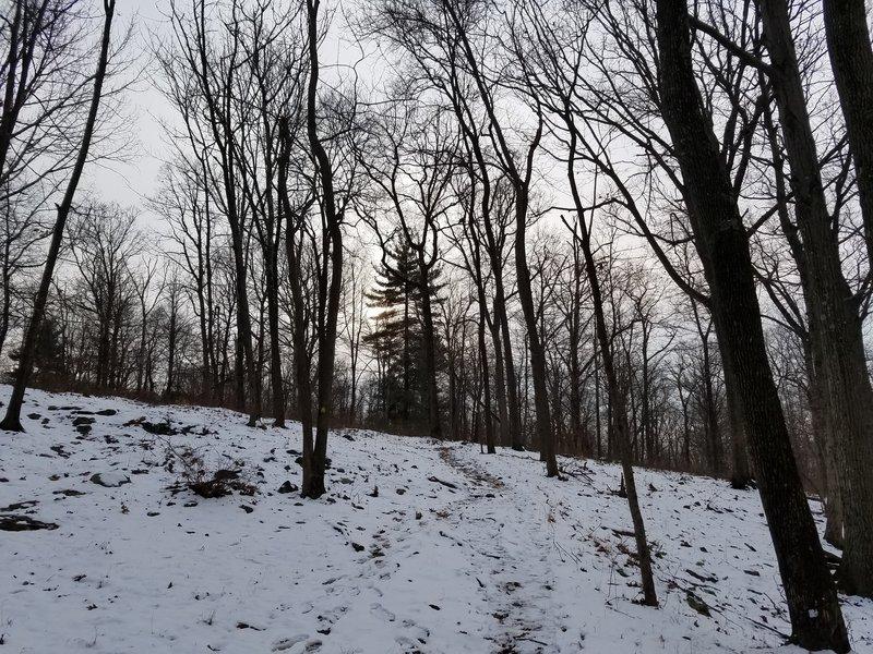 Lenape Trail, near Balls Bluff