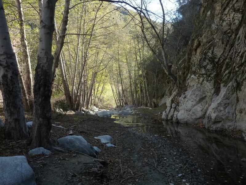 Bear Creek at location where upper trail reaches canyon bottom