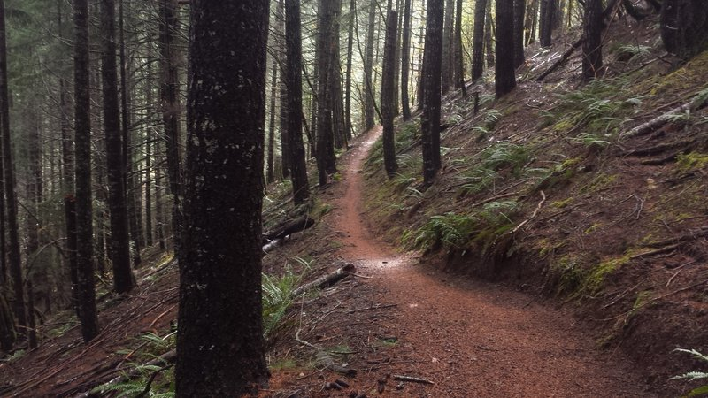 Scene from the 'Jedi' section of the Taylor Creek Trail
