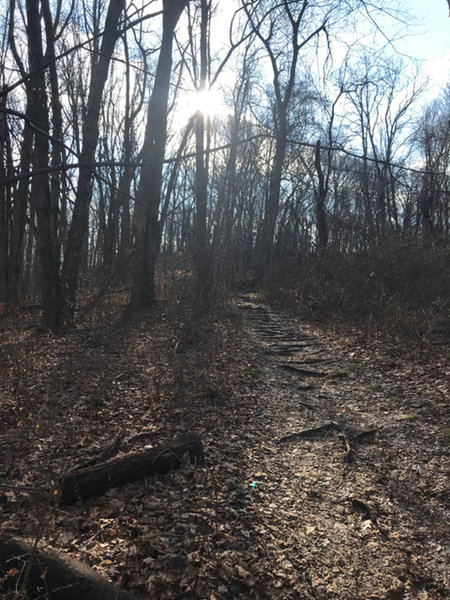 The short singletrack connecting the carpark with the main trail is the roughest part of the trail
