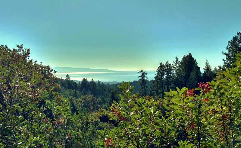 The Pacific Ocean sparkles on a clear December afternoon, from high on Aptos Creek Fire Road.