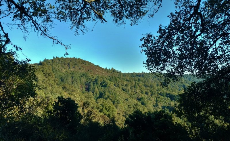 Santa Rosalia Mountain, at 2,529 ft., is seen through a break in the trees when looking northeast from Bacon Trail.