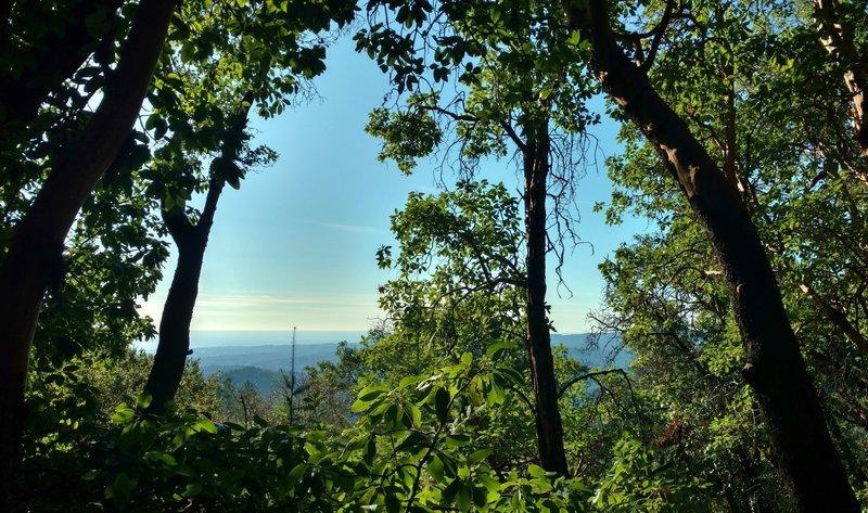 Santa Cruz Mountains and Pacific Ocean, are seen through the trees along Bacon Trail.