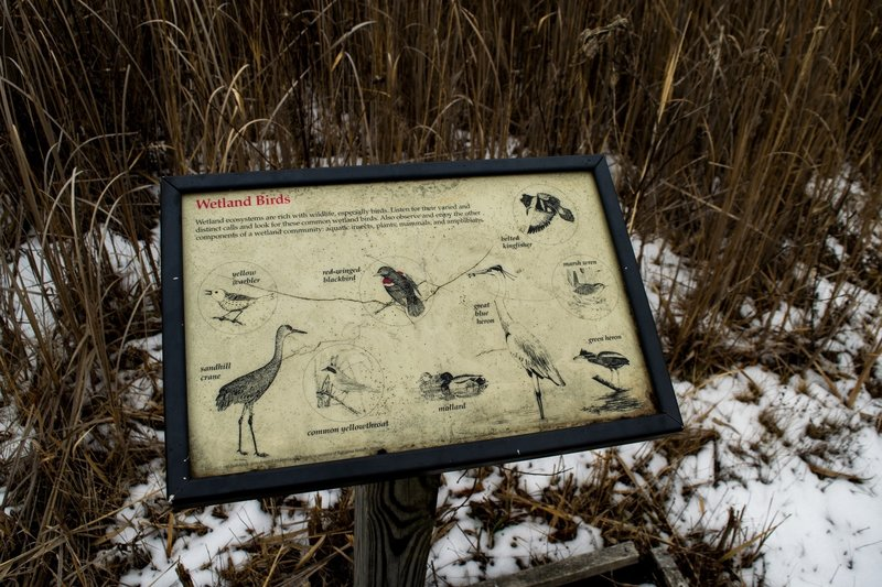 Identify birds with the family