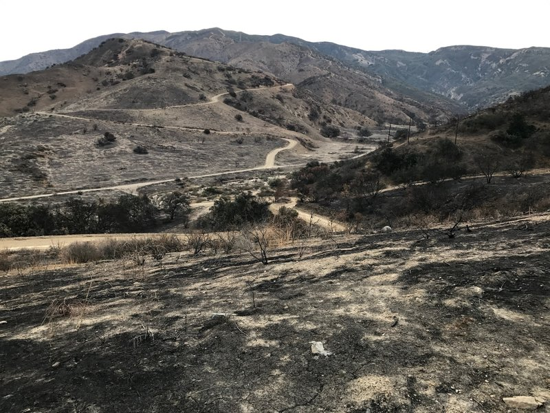 Lower Coal Canyon after October 2017 fire.