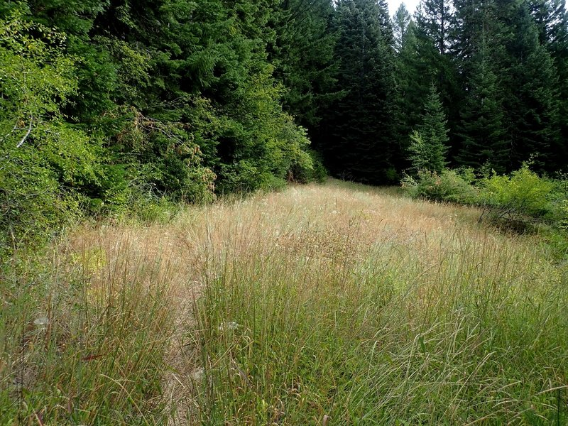 Today's trail to Boccard Point was once an old road