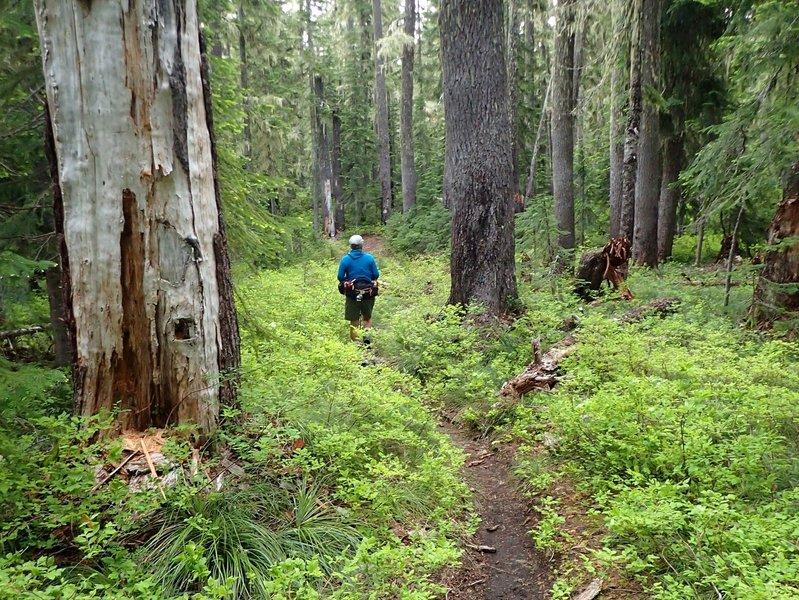 Along the Mount Yoran Trail