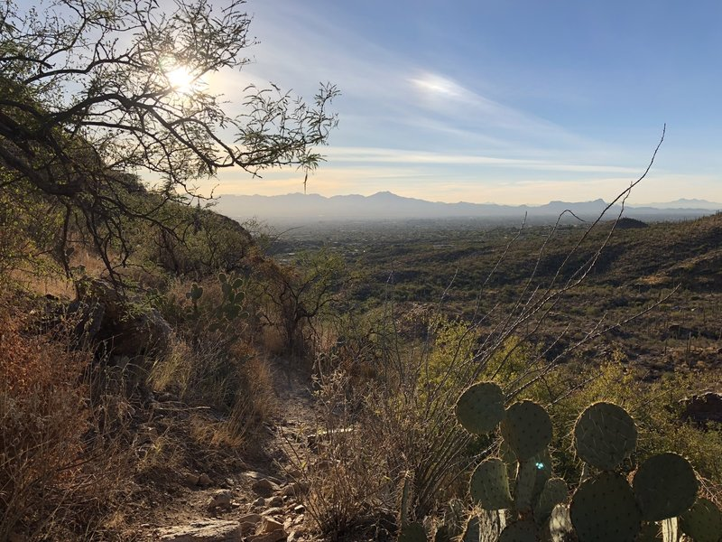 Great views over Tucson