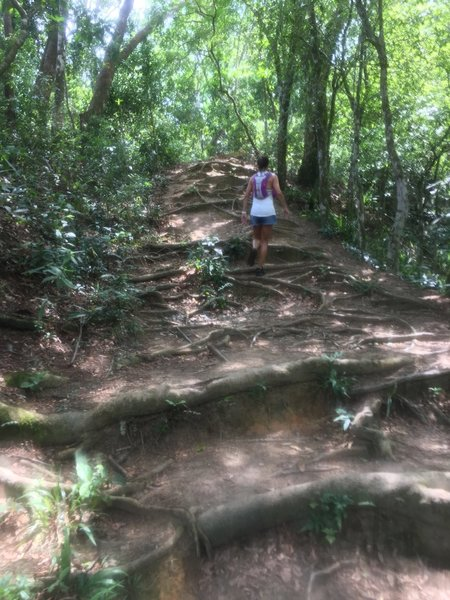 Typical terrain at the trails in Ilha Grande.