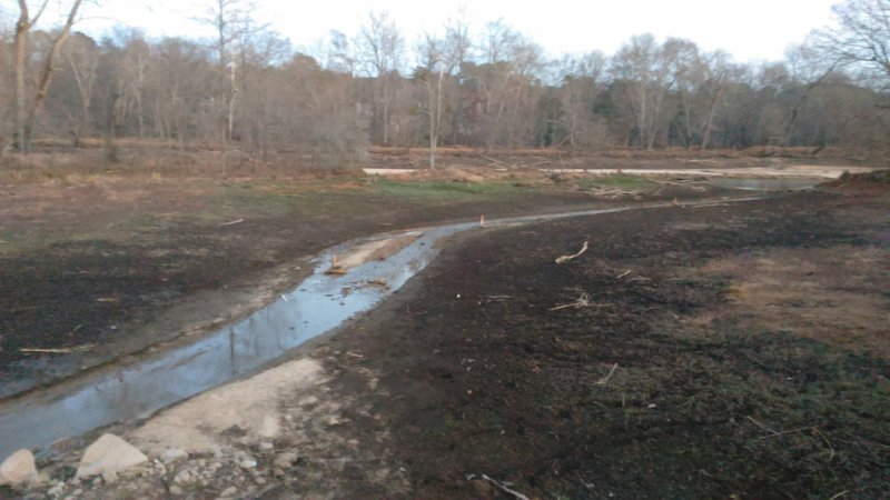 Wetland portion of Neuse River