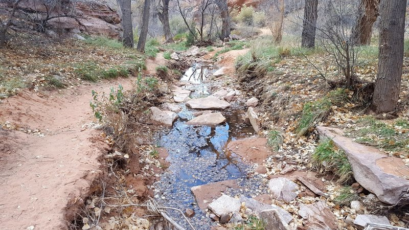 The Creek Next to the Trail