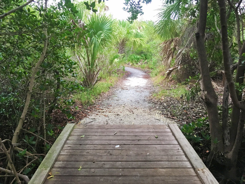 Several small bridges help crossing on Boy Scout Trail.