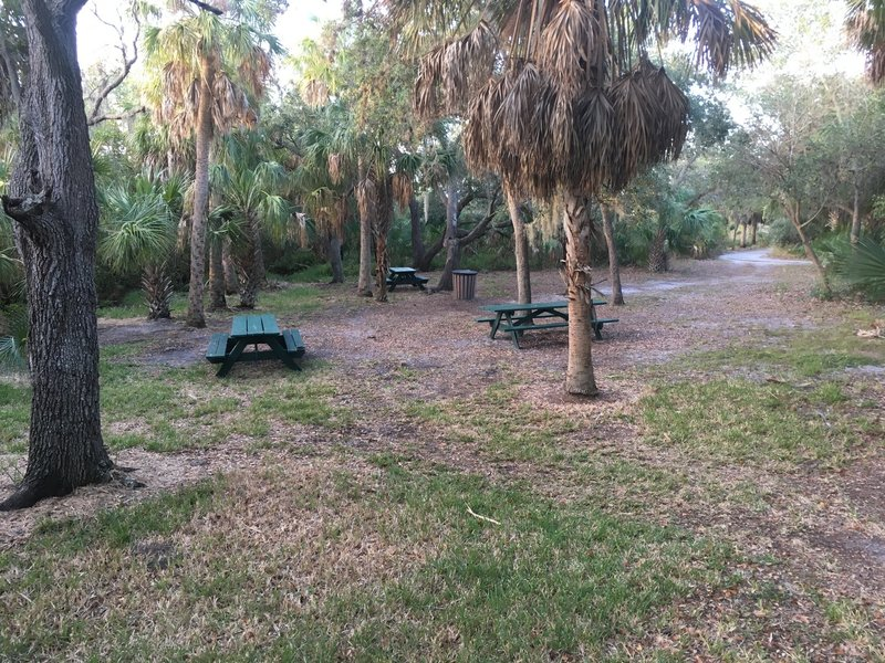 Picnic Area 2 is located where 3 trails meet: Lookout Point, Bay Boardwalk and Upland Trail.