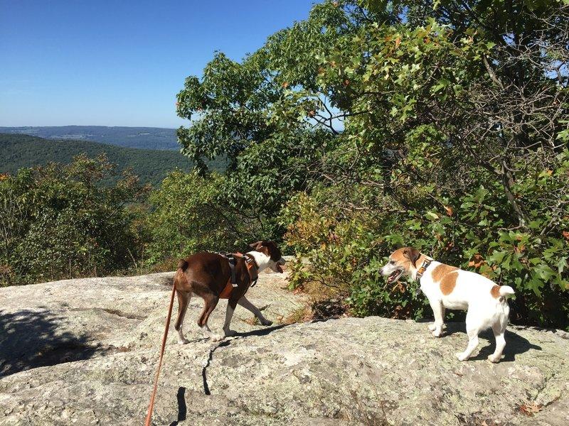 Pups taking a water break on Cobble Mountain