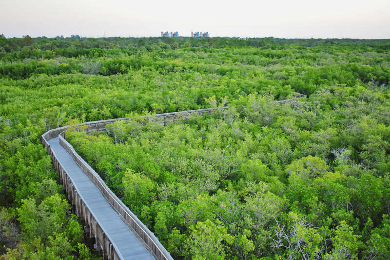 A view atop the observation tower, Bartow energy plant in distance.