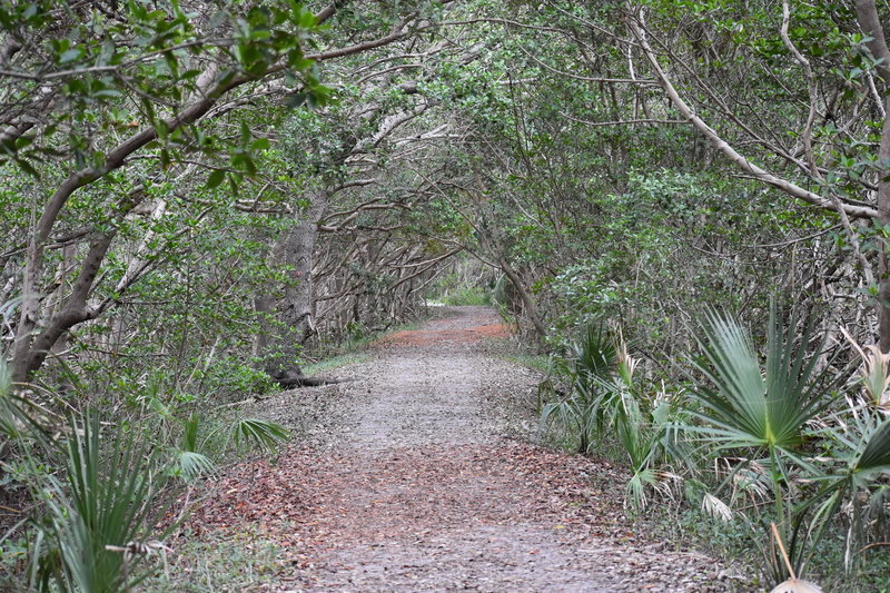 This berm under a mangrove canopy leads to lookout point.