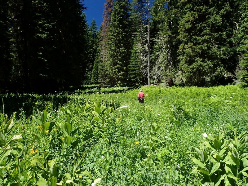 Waldo Meadows in summer