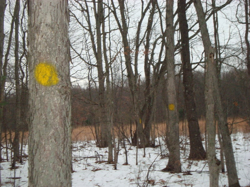Go ahead and snowshoe. The trail is marked with yellow blazes on the trees.