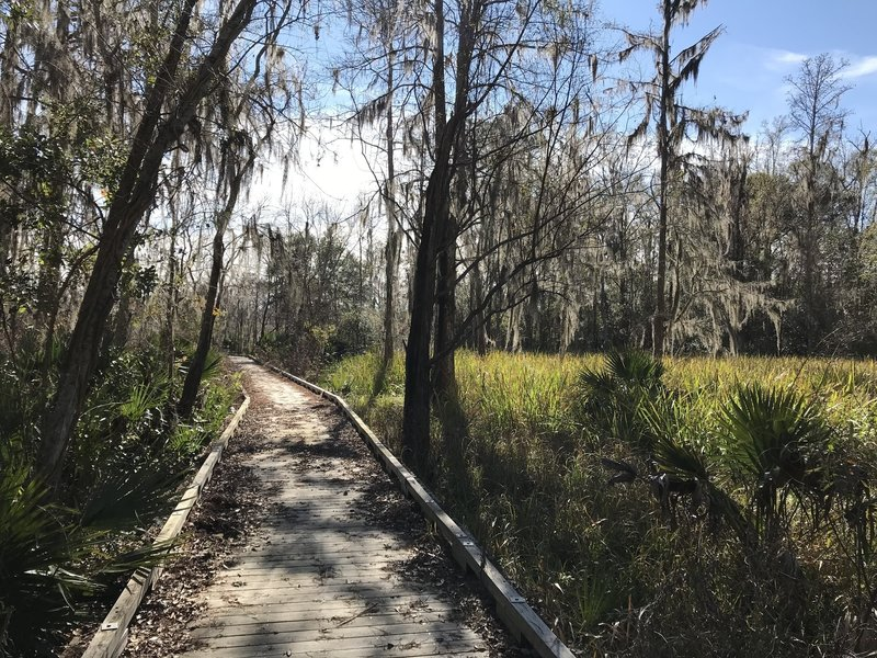 Raised boardwalk cutting through the swampy edge of Bogue Homa