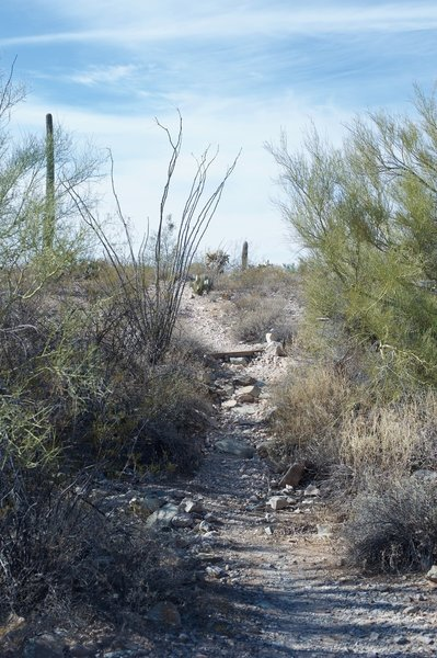 The trail makes its way through a wash where summer rains drain away from the campground.