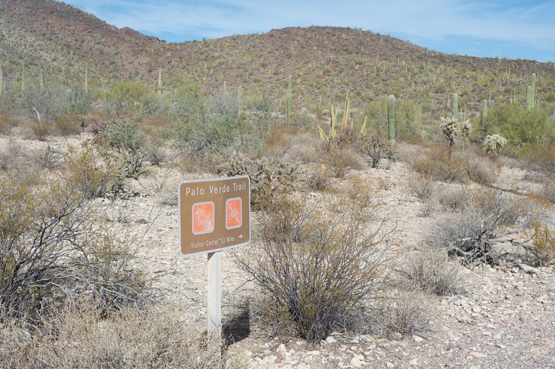 The Palo Verde Trail heads off to the visitor center from the campground.