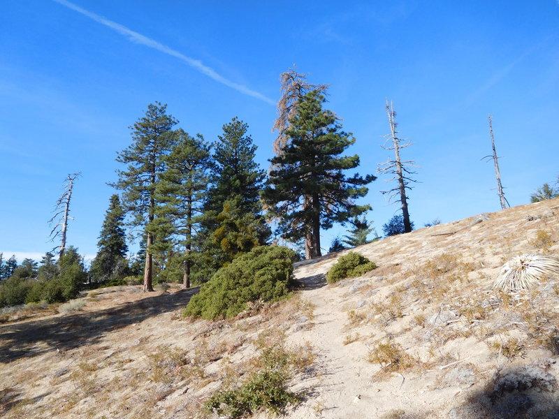 Shady spot where trail reaches main ridge.