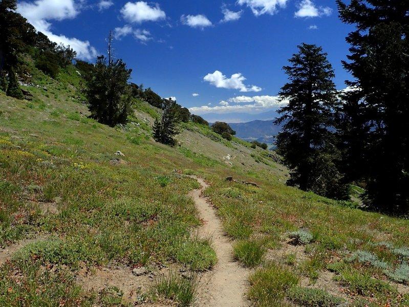 The Wright Lake Trail gains the ridge