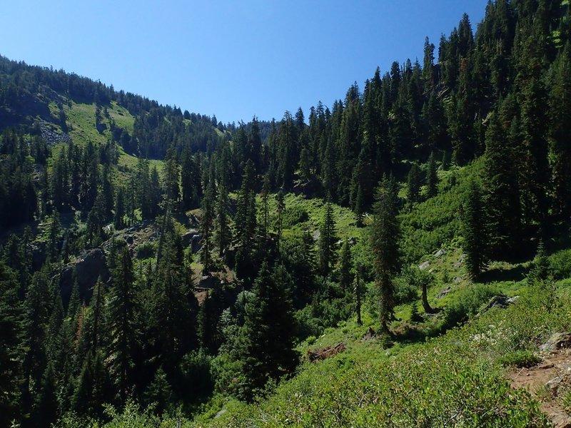 Lush vegetation in Boulder Creek Canyon