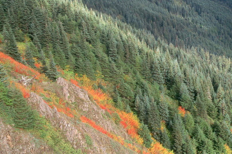 Even when you miss the summer wildflowers, fall provides another colorful hiking opportunity.