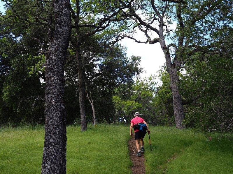 Climbing up the Willson Peak Trail