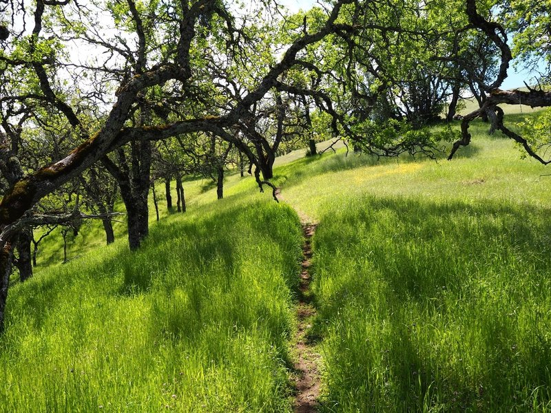 The trail passes through stands of oaks