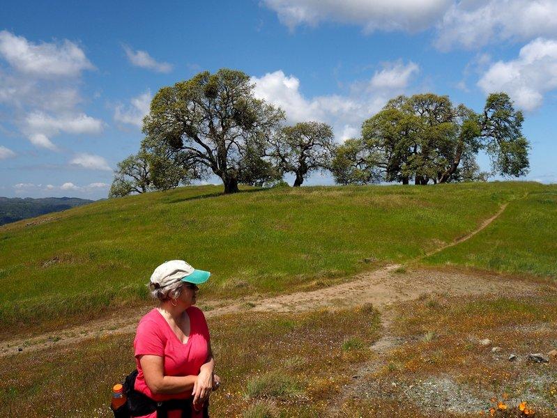 Willson Peak from Steer Ridge Road