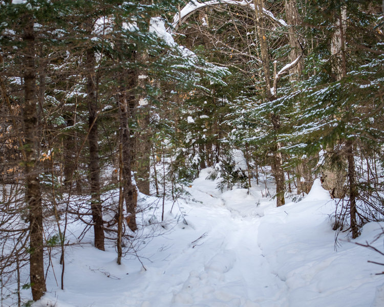 Trail is obvious, but gets deep near the intersection with the Walden Trail.