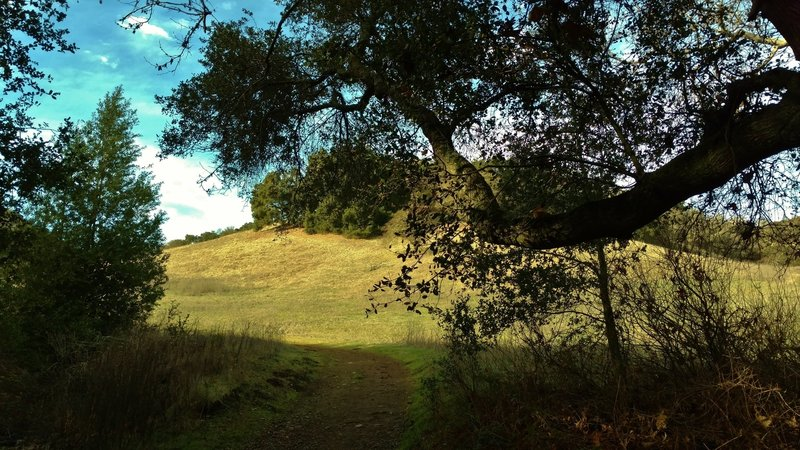 Emerging from the woods into the grass hills of Figueroa Trail