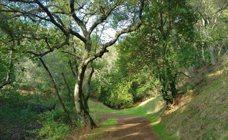 Figueroa Trail runs along a wooded and grass hillside with a seasonal stream below the trail, on the left.