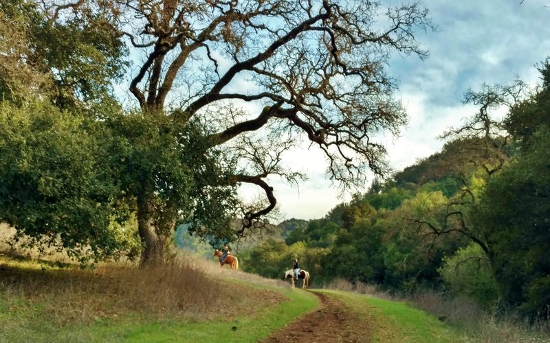 Horses enjoying the serenity of the lightly used Figueroa Trail