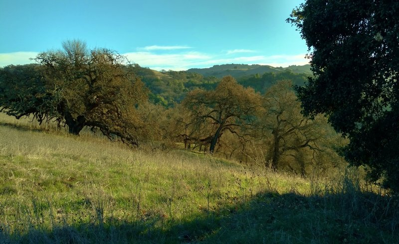 The grass and wooded hills of Calero County Park, along Los Cerritos Trail.