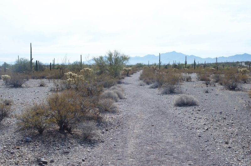 The Palo Verde Trail is little more than a gravel trail as it heads toward the campground.  However, as you can see in the distance, the mountains rise above the desert, providing great views.