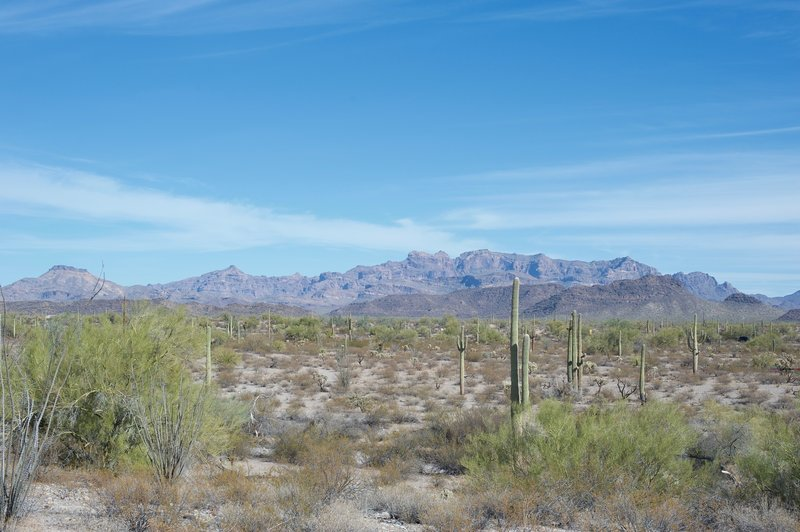 Views of the Ajo range sit off to the left hand side of the trail as you head to the Campground.
