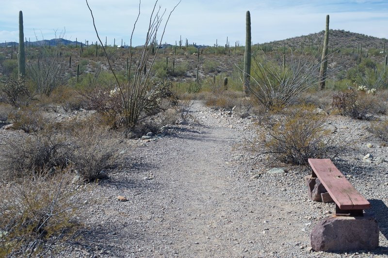 Benches sit alongside the trail in case you need to rest on the journey.