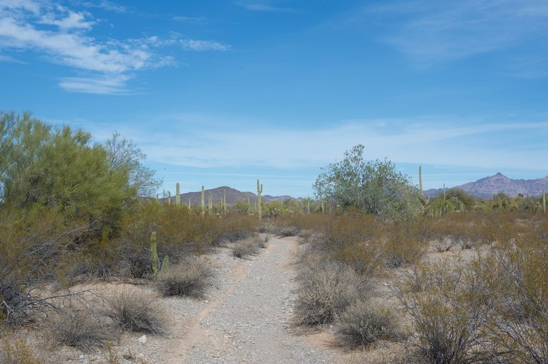 The trail as it makes its way through the desert.