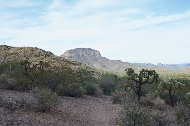 The Sonoran Desert spreads out before you, allowing you to see how green it really is.