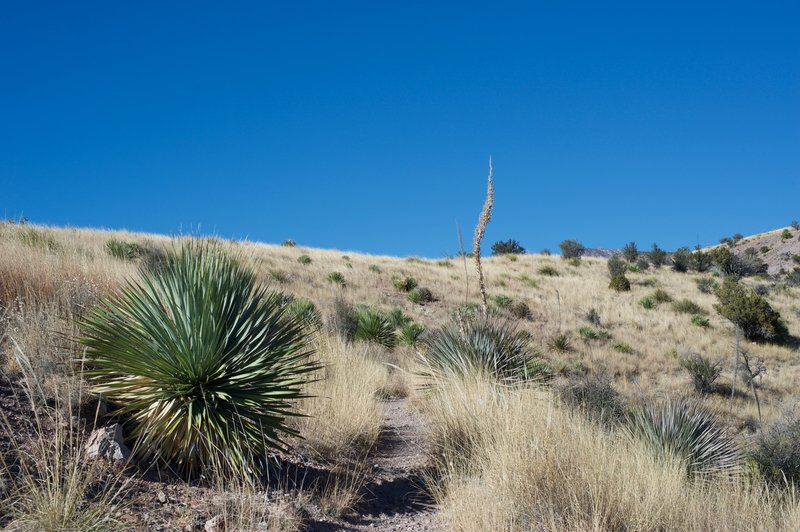 The trail is narrow and grasses encroach on the trail, so even though it is hot, pants are recommended to help protect your legs.
