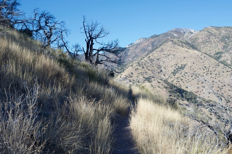 While the trail is narrow, it is easy traveling.  And depending on the time of day, you might get some shade from Coronado Peak.