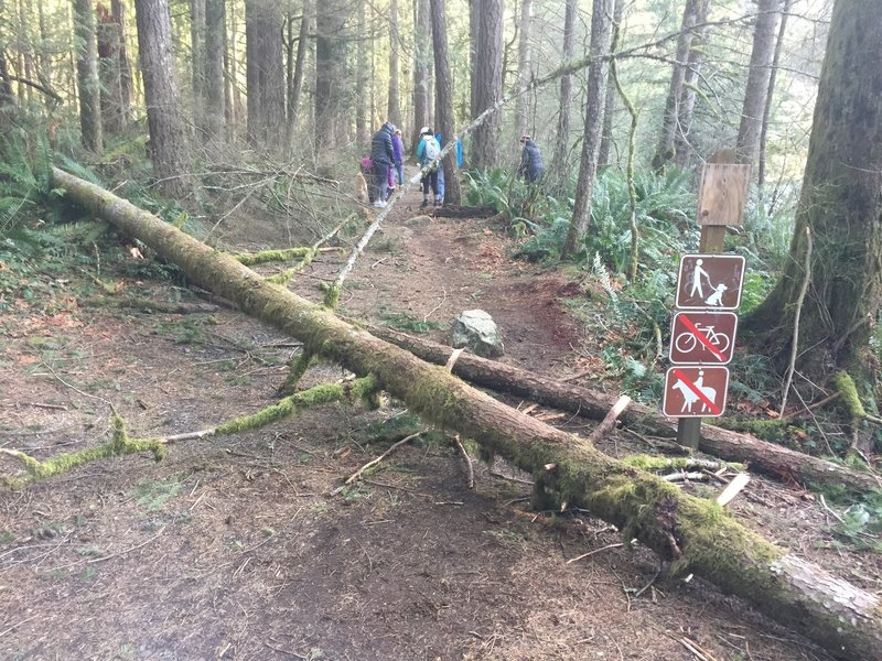 The tree down at the entrance of the trailhead