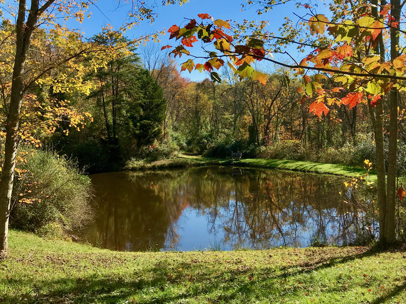Upper pond in Broughton Nature and Wildlife Education Area.